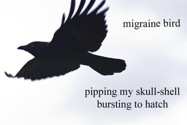 migraine bird