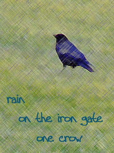 haiku crow
